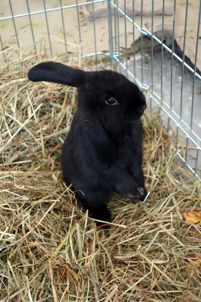 Kaninchen zu Besuch in der Mitmachstadt. Foto: Ruth Gilberger